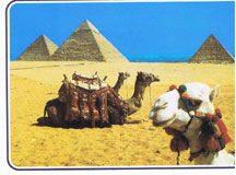 Egypt, Pyramids and camels