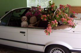 Zuzi in car with flowers